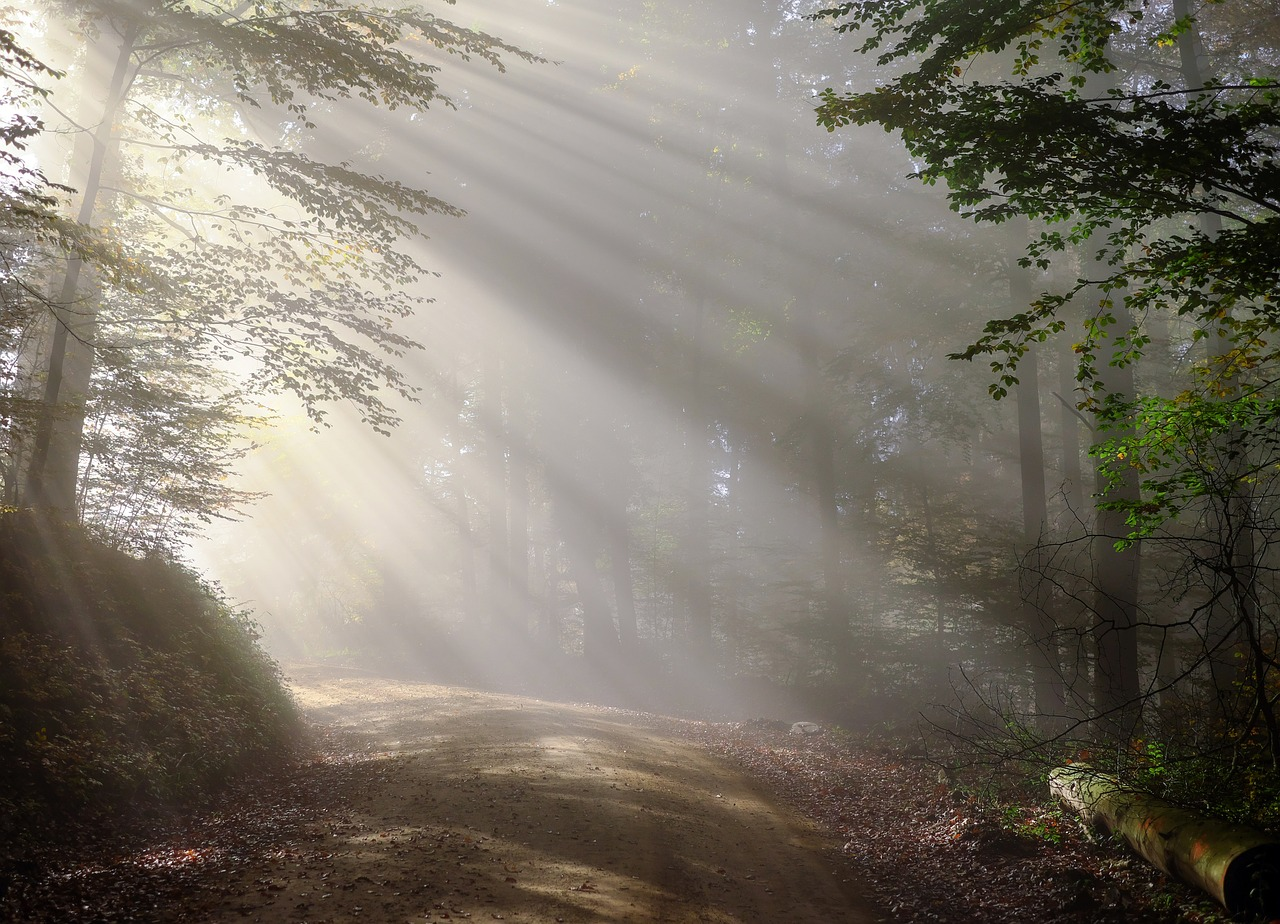 Gut Lilienfein: eine besondere Perle im Schwarzwald